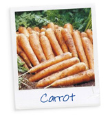 Know your Veg - Carrot