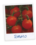 Know your Veg - Tomato