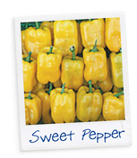 Know your veg - Sweet Pepper