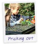 Pricking Out