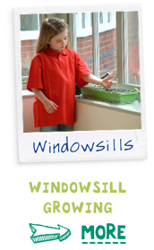 Window Growing - find out more